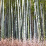 http-%2F%2Fmashable.com%2Fwp-content%2Fgallery%2Fjapan-bamboo%2Fjapan_bamboo_08