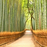 japan_kyoto_tour_bamboo_grove1_3