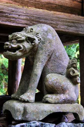 An unusual komainu at Yaeyama Shrine in Okuizumo.
