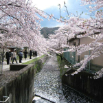 08_04_08_Kyoto_021
