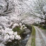 z20100405-kyoto-philosopher-path-5